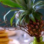 パイナップル 夏の花