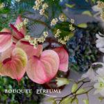 アンスリウム 夏の花 ピンの花