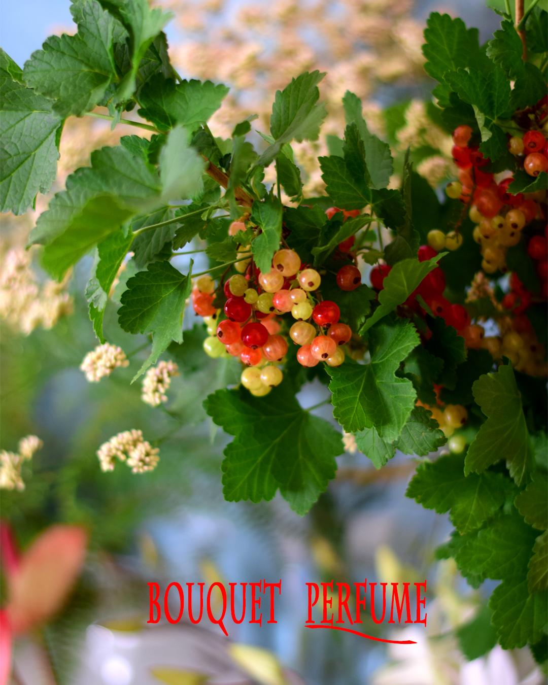 夏のおすすめ。人気の赤い実もの。房すぐり