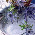 エリンジウム 青い花