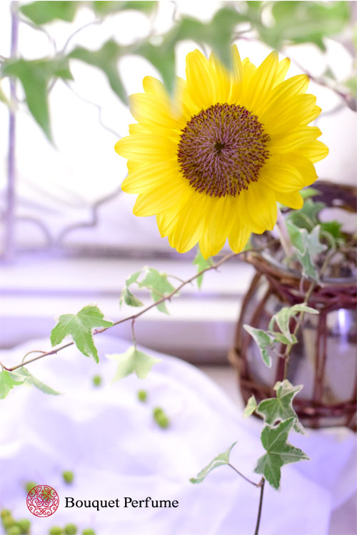 夏の黄色い花